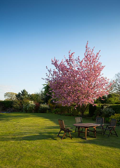 jardin maison herbe tondue