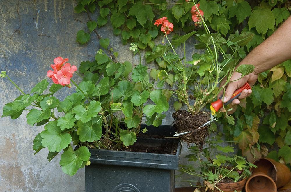 outils wolf lubk fourche a fleurs