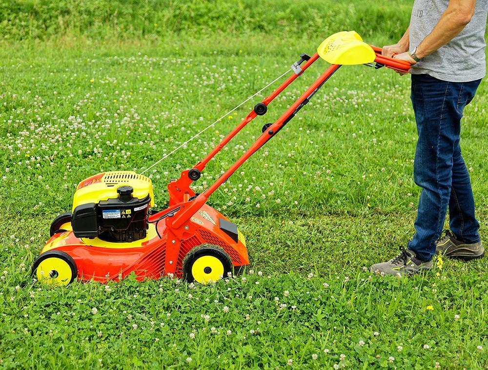 tonte mulching pour pelouse bien entretenue