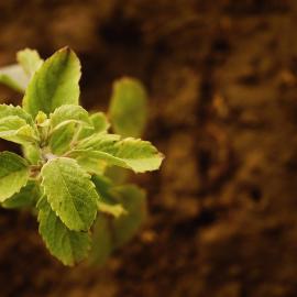 Plant terre jardin