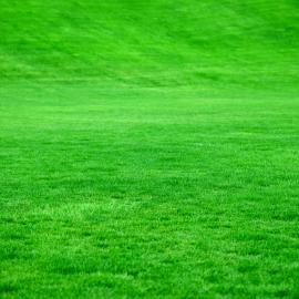outils wolf comment avoir une belle pelouse