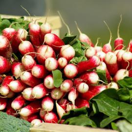 potager-radis