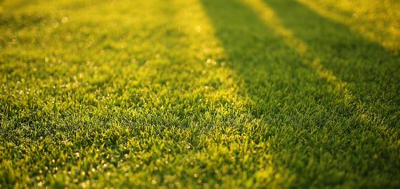 herbe pelouse gazon jardin